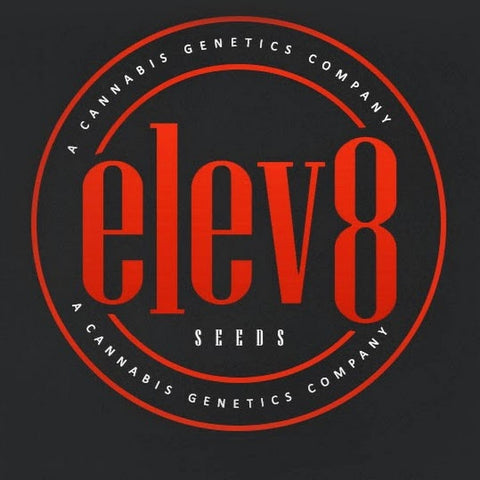 Sour Diesel seeds Elev8 pack of 6 regular seeds