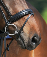 Passier  Exchangeable Noseband Caveson Special with Flash