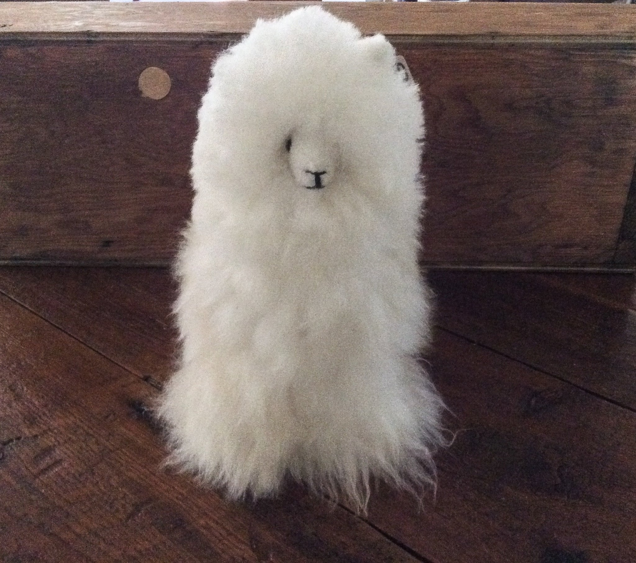 alpaca-stuffed-animal-1