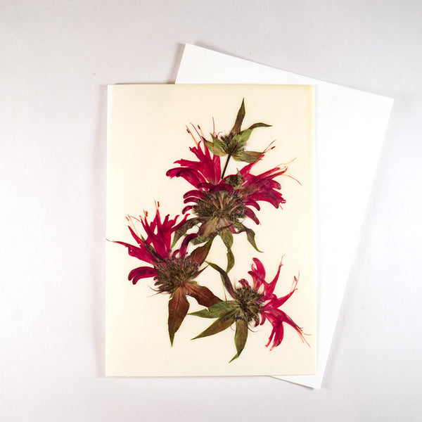 Bee Balm Beeswax Card