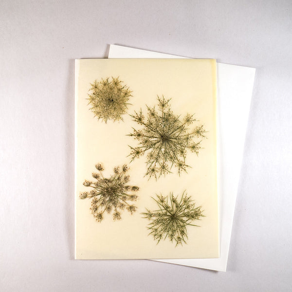 Queen Anne's Lace Beeswax Card