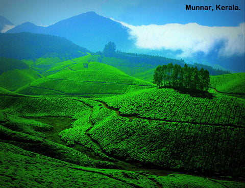 Kerala (4N/5D): Stay in 3 Star Hotels + 2 Nights in Munnar + 2 Nights in Thekkady + Elephant Safari & More!
