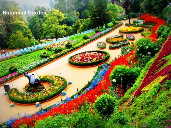 Ooty(queen of hill stations):-2Nights / 3Days: Stay 3 Star Hotel + Ooty Sightseeing  & More!
