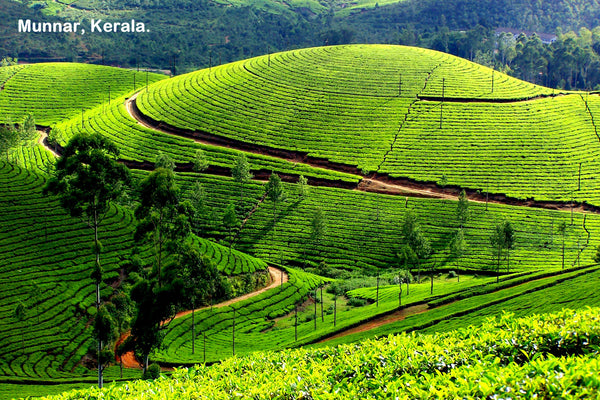 Kerala (6N/7D): Stay in 3 Star Hotels + 2 Nights in Munnar + 2 Nights in Thekkady + 1Night stay in AC Deluxe Houseboat at Alleppey (Kerala Backwaters) + 1 Night in Cochin & More!