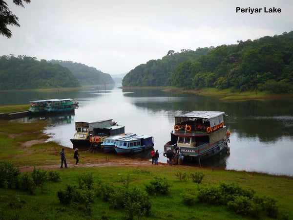 Kerala Honeymoon special (4N/5D): Stay in 3 Star Hotels + 2 Nights in Munnar + 2 Nights in Thekkady + Elephant Safari & More!