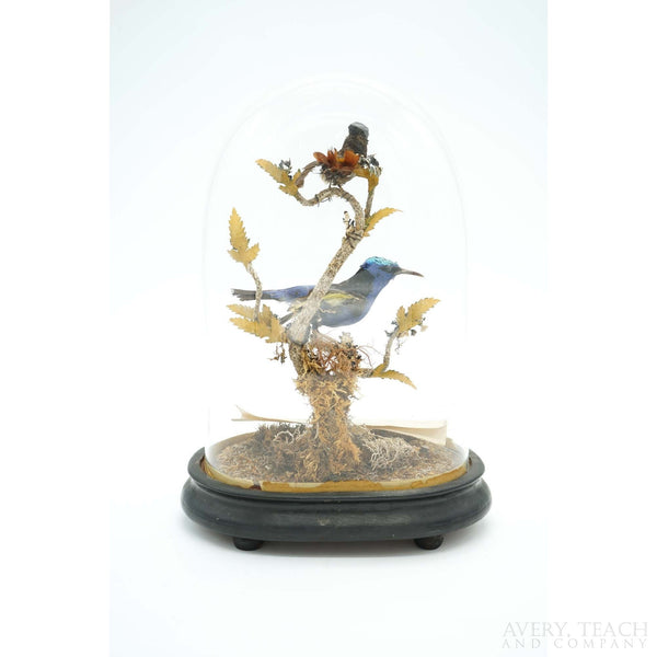 Rare Victorian Taxidermy Blue Honeycreeper & Topaz Hummingbird Mounted on Wooden Base - Avery, Teach and Co.