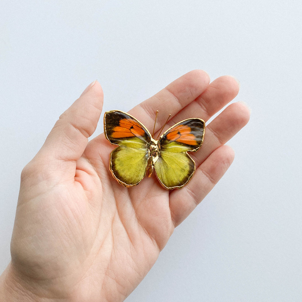 Gold Dipped Butterfly Pendant | Real Butterfly Wing Necklace
