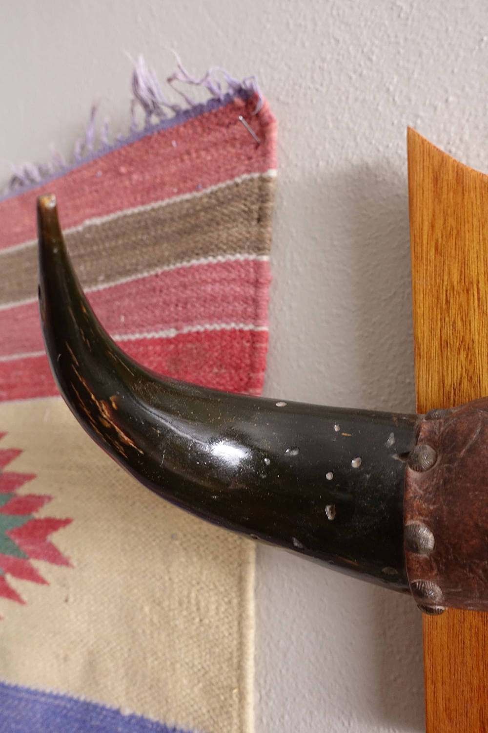 Vintage Mounted Bull Horns