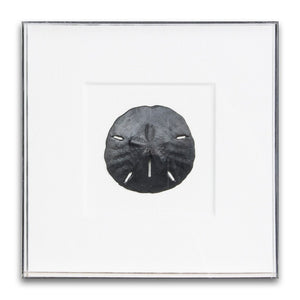 Acrylic Box Sand Dollar | WJC Design | Local Shop | Houston | Wall Half Full