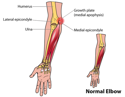 The Elbow Joint Mobility Health