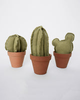 Reworked Mini Cactus Trio Set