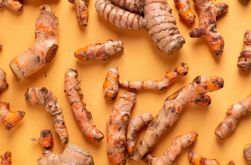Multiple Turmeric roots close up on the yellow background
