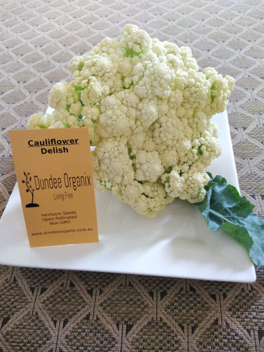 Cauliflower 'Delish'-Vegetables-Dundee Organix