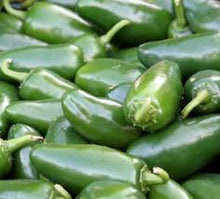 "Chilli "" Jalipeno '-Vegetables-Dundee Organix"