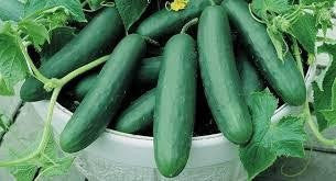 Cucumber ' Muncher '-Vegetables-Dundee Organix