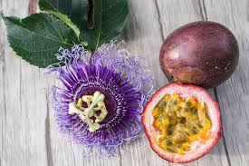 Passion Fruit Vine - Purple - Dundee Organix
