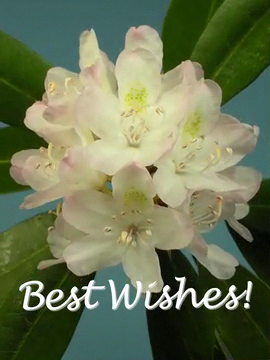 Bokay® Best Wishes