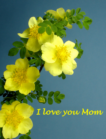 Bokay® I Love You Mom