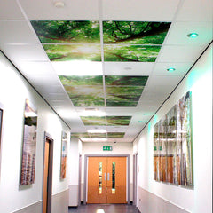 Floor & Ceiling Graphics