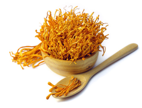 cordyceps heal infection