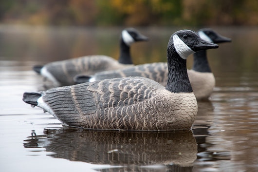 Floater Canada Goose Decoys - Per 6