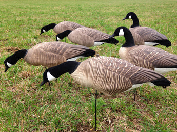 Bulk Decoy Club Canada Goose Fullbody Decoys