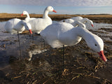 Bulk Decoy Club Fullbody Snow Goose Decoys