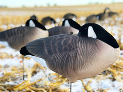 Fullbody Canada Goose Sleeper Decoy Cheap