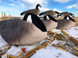 Canada Goose Resters Sleepers Cheapest