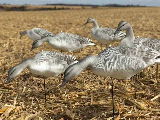 Fullbody Juvy Snow Goose Decoys | CHANGING THE SNOW GOOSE DECOY GAME