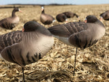Sleeper Fullbody Specklebelly Decoys - Per 6