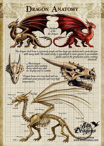 Anne Stokes Age of Dragons Dragon Anatomy Canvas Small
