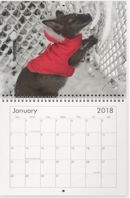 Jack the Wallaby 2018 Calendar