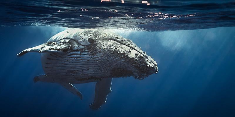 Whale breathing classes