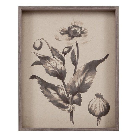 "BFA 100-491 Poppy Engraving (8"" x 10"")"