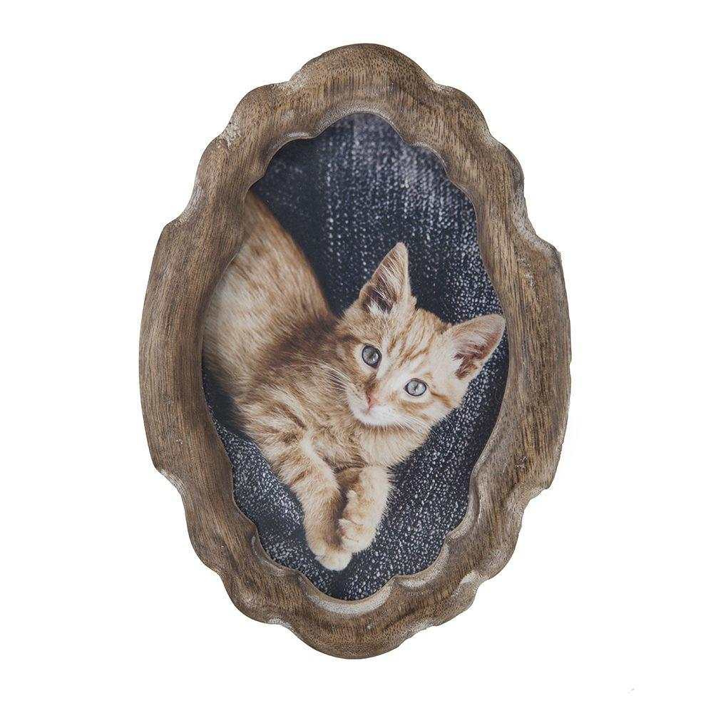 "BFA  100-899 Kitten Close-Up (5"" x 7"")"