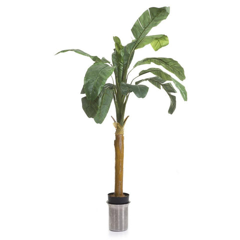 Faux Banana Tree in White Planter