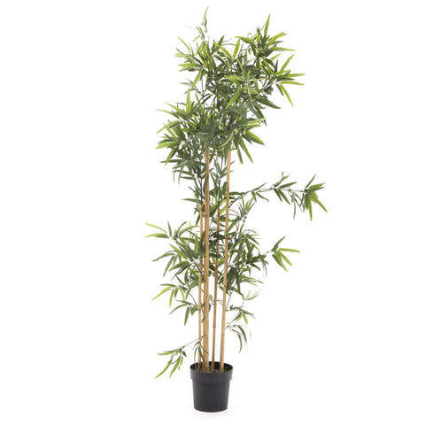 Bamboo Plant in Planter