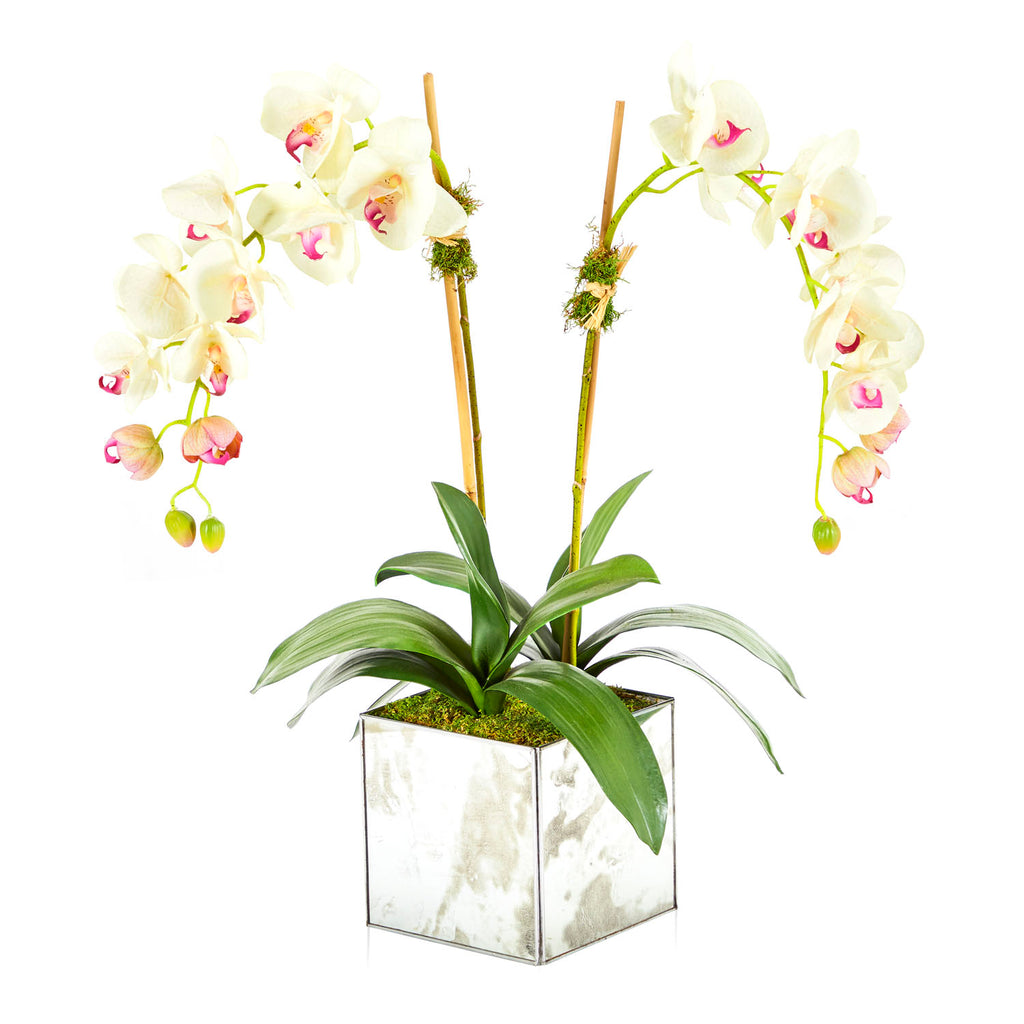 White Orchids in Mirrored Planter