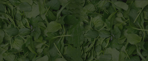Organic Baby Spinach