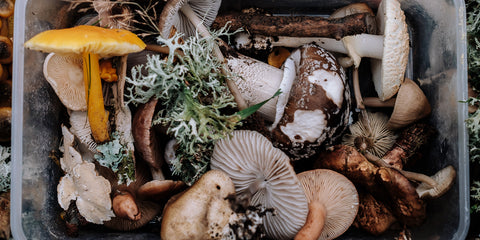 5 Beginner Tips for Embracing The Lost Art of Food Foraging