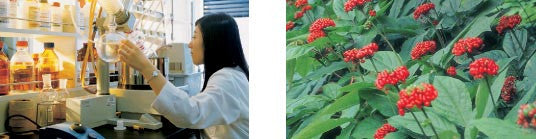 Korea's Ginseng Industry