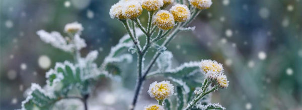 Don't Overlook These Garden Winterizing Tasks