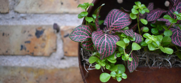 Tony's Top Ten Reasons Houseplants Make You a Healthier Person