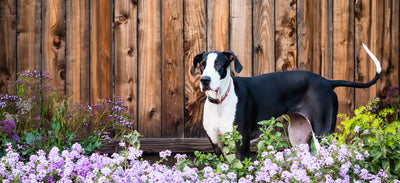 Letting Your Landscape Go to the Dogs