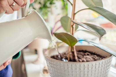 Life-Saving Indoor Plant Resolutions