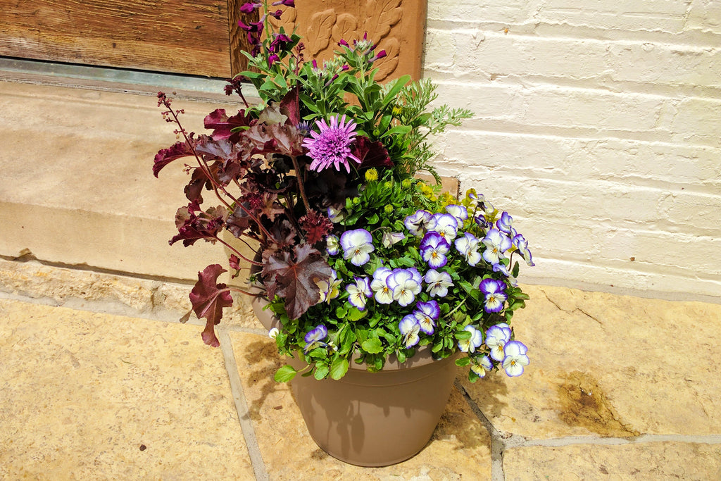 Professional's Secrets of Container Gardening