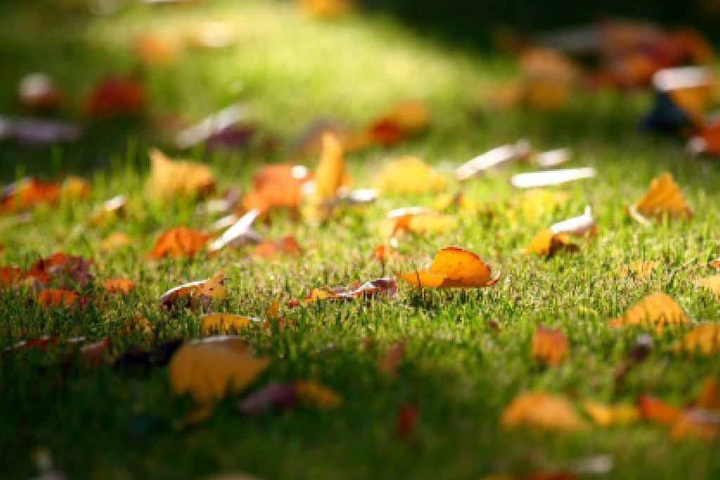 Learning Center | Fall Lawn Care