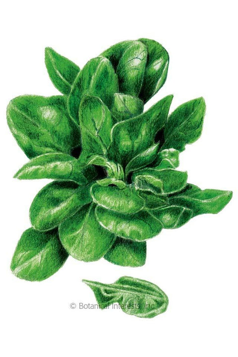 Seeds, Matador Spinach