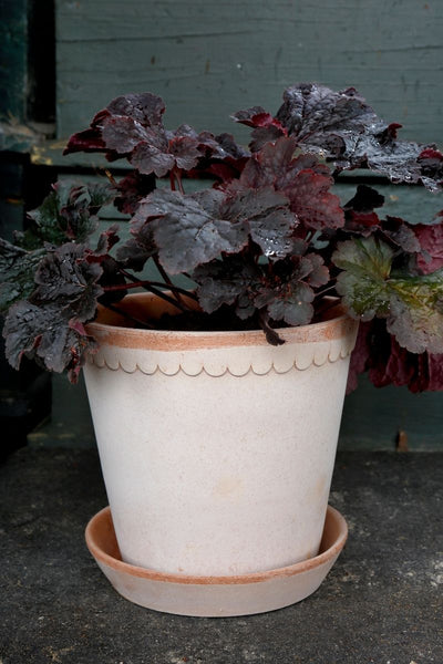 Berg's Helena Rosa Antique Pot 5.5""